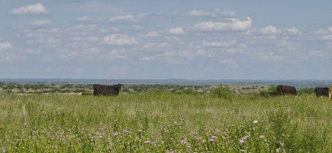 Environmental Stewardship Region IV • Burnett Ranches, LLC, 6666 Ranch