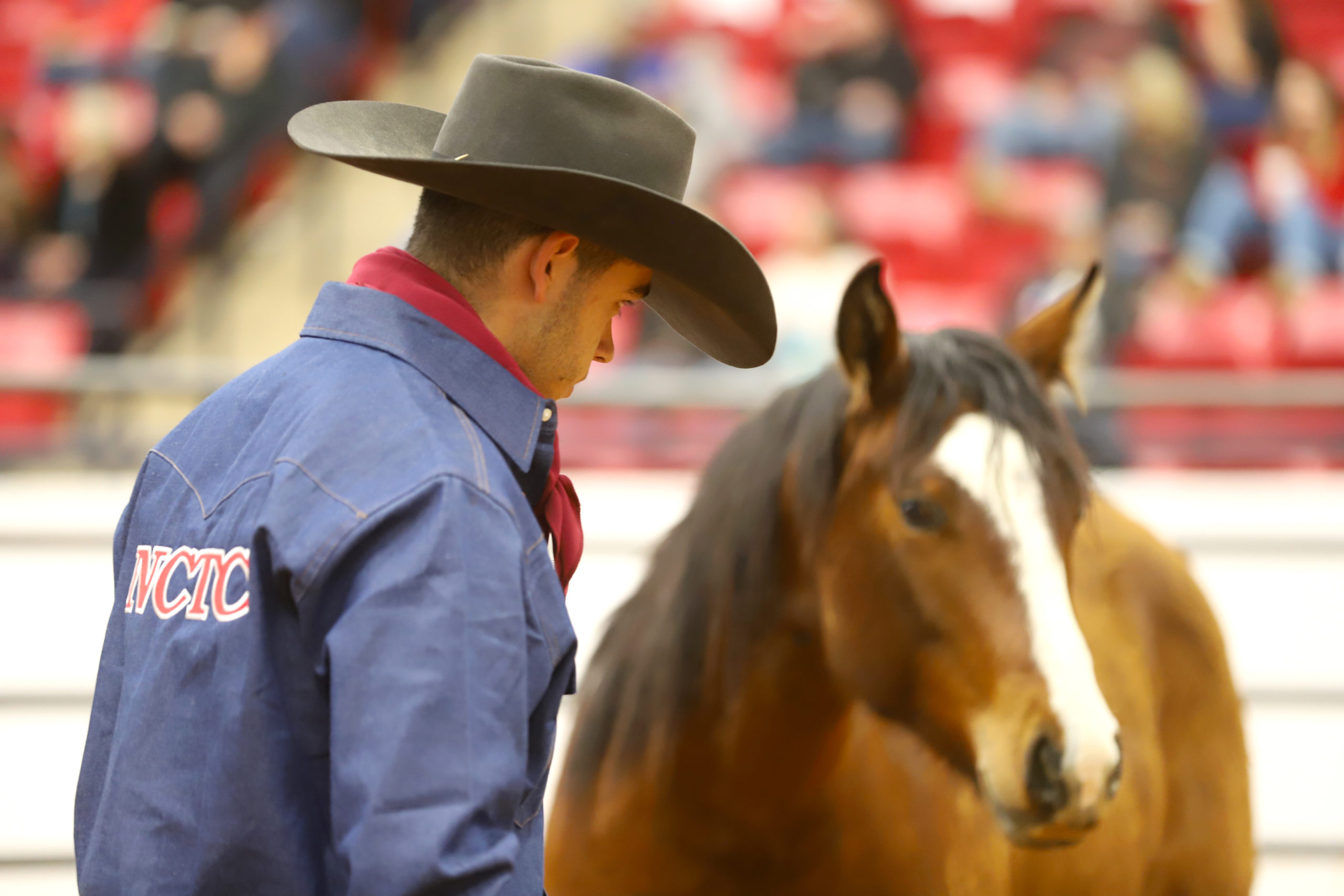 Texas College Takes Top Honors at Road to the Horse Collegiate Colt Starting Challenge