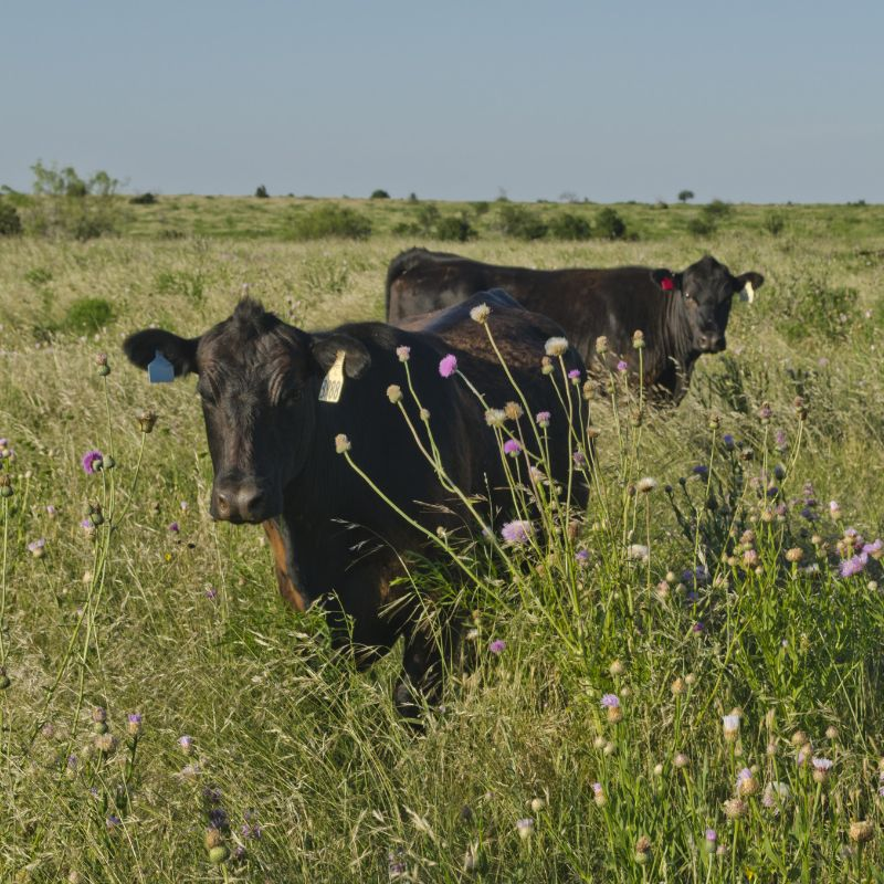 Angus VNR: The Capability of Traceability
