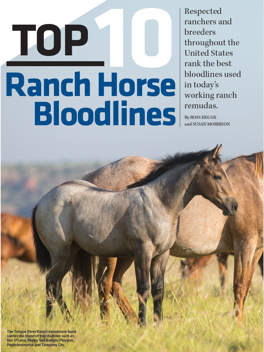 Top 10 Ranch Horse Bloodlines