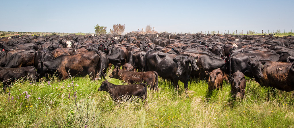 The beef business: Surviving and thriving