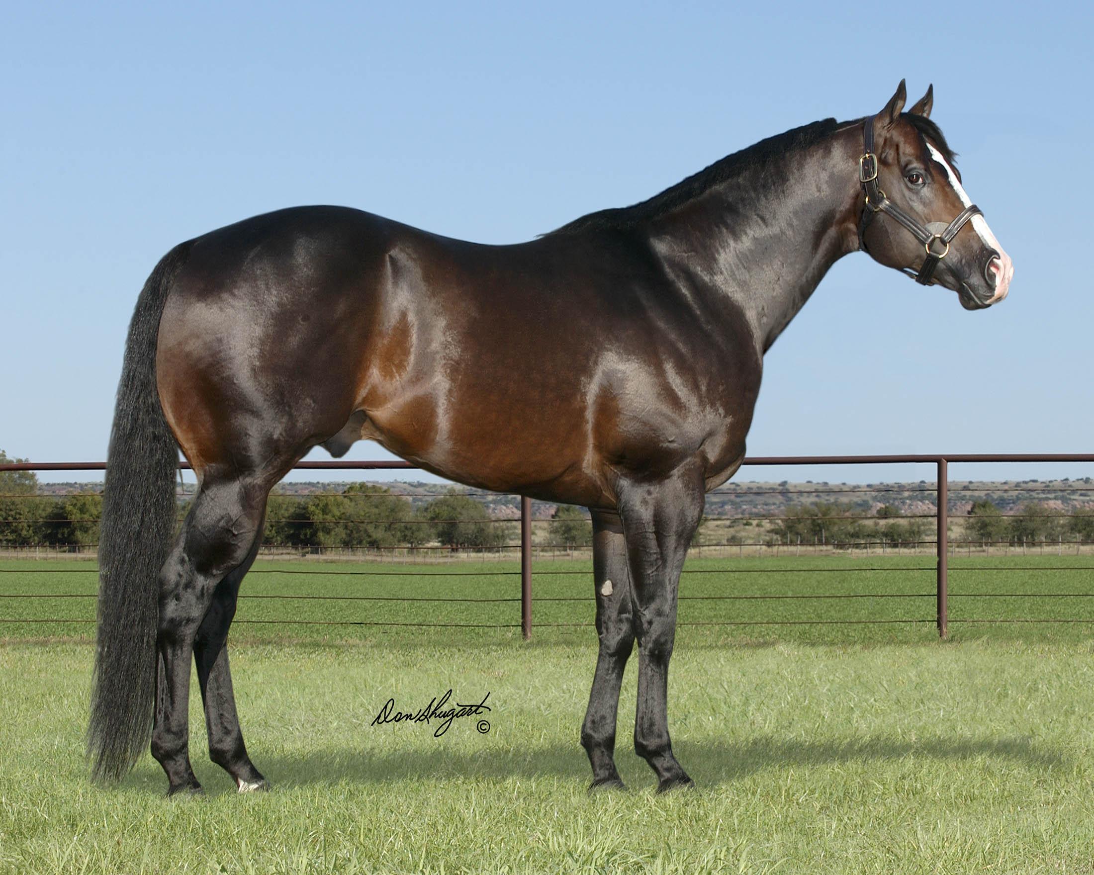 Silver City 102 Horses