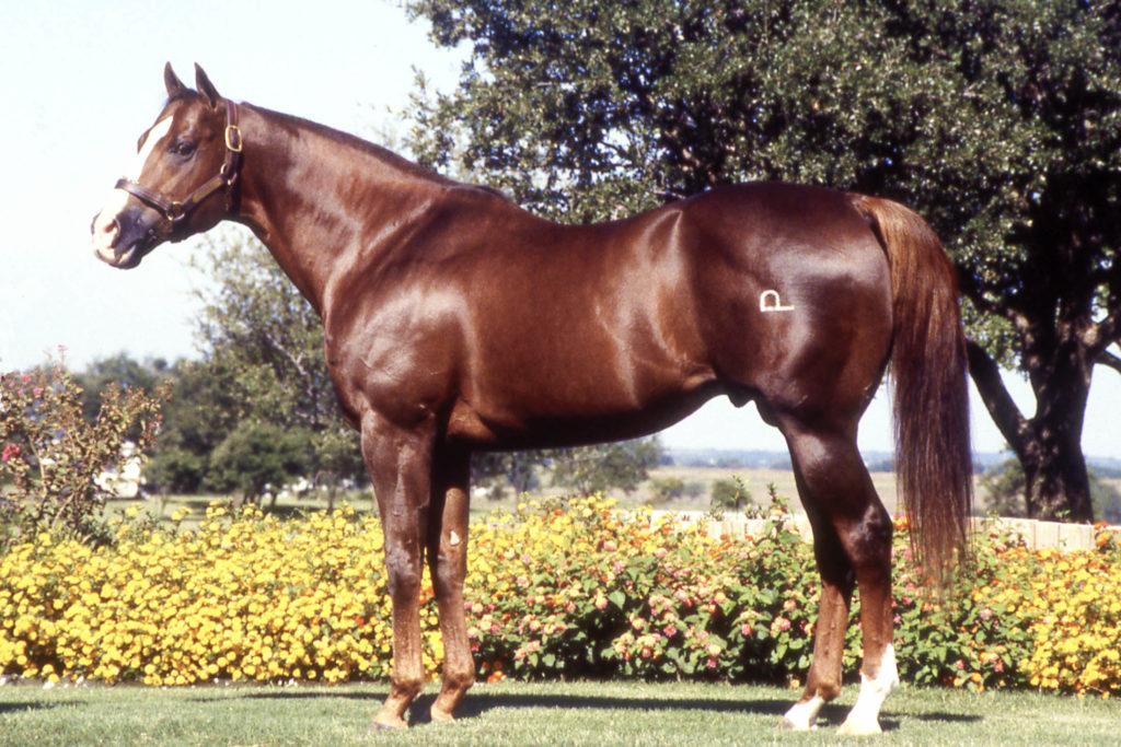 Streakin Six 1977 / Sorrel Stallion (Easy Six - Miss